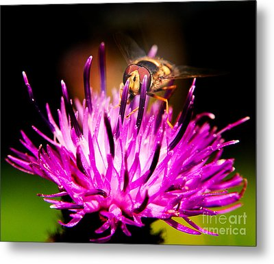 Insects Up Close Metal Print by Chris Smith