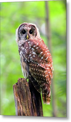 Insidious Eyes Metal Print by Timothy McIntyre