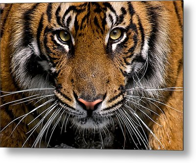 Intensity Metal Print by Cheri McEachin
