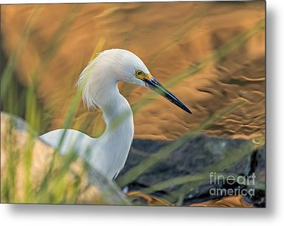 Intent Hunter Metal Print by Kate Brown