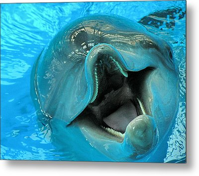 Into The Dolphin Metal Print