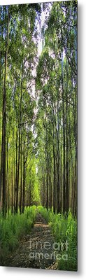 Metal Print featuring the photograph Into The Forest I Go by DJ Florek