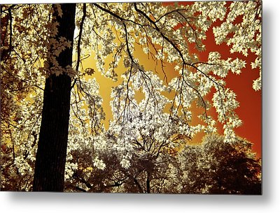 Metal Print featuring the photograph Into The Golden Sun by Linda Unger