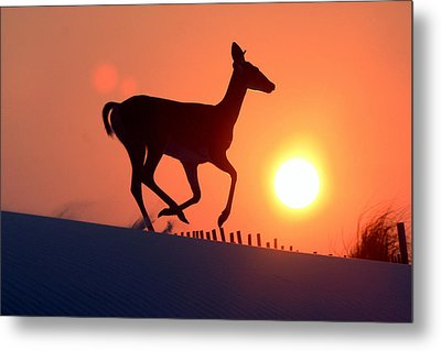Into The Sunset Metal Print by Scott Mahon