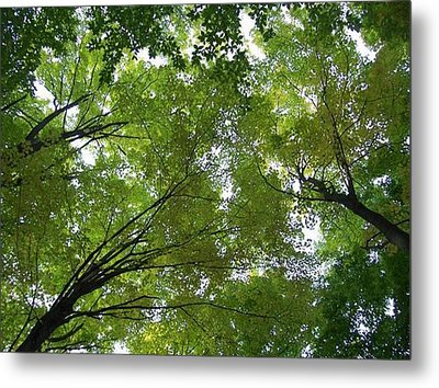 Metal Print featuring the photograph Into The Trees by Michael  TMAD Finney