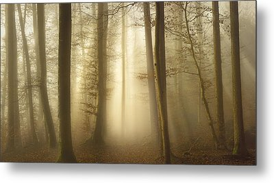 Into The Trees Metal Print by Norbert Maier
