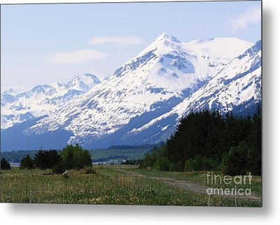 Into The Wilderness Metal Print by Laurinda Bowling