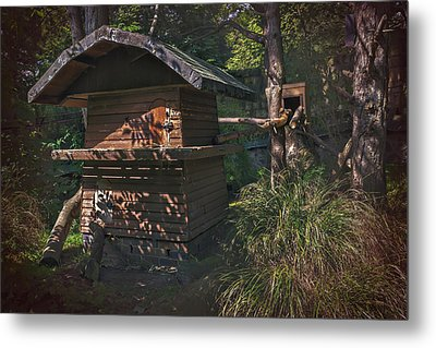 Into The Woods Metal Print by Carol Japp