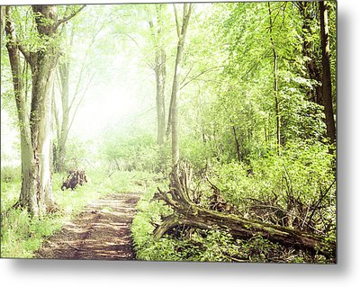 Metal Print featuring the photograph Into The Woods by Joel Witmeyer