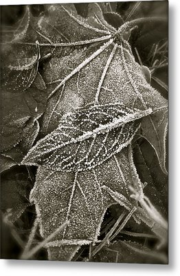 Intricately Frosted Metal Print by Gwyn Newcombe