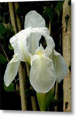 Iris After The Storm Metal Print by Charles Ables