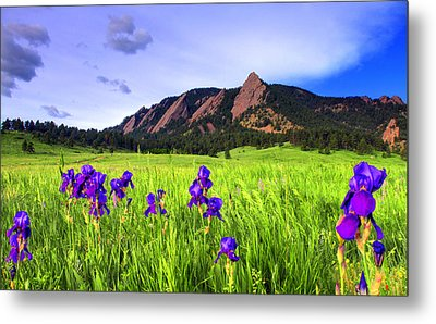 Iris And Flatirons Metal Print by Scott Mahon