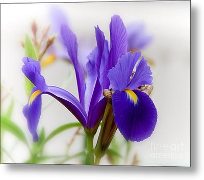 Metal Print featuring the photograph Spring Iris by Elaine Manley