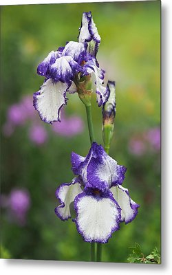Iris Loop The Loop  Metal Print