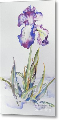 Metal Print featuring the painting Iris Passion by Mary Haley-Rocks