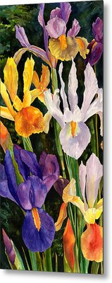 Irises In Bloom Metal Print