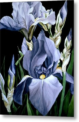 Irises In Blue Metal Print by Alfred Ng