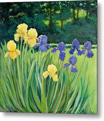 Irises In The Garden Metal Print by Betty McGlamery