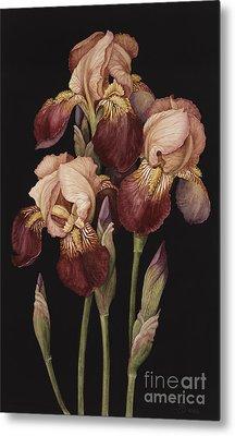 Irises Metal Print by Jenny Barron