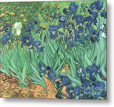 Irises Metal Print by Vincent Van Gogh