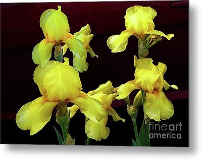 Metal Print featuring the photograph Irises Yellow by Jasna Dragun