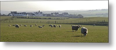 Irish Sheep Farm I Metal Print