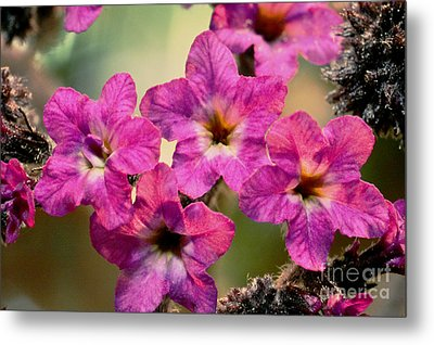 Irridescent Pink Flowers Metal Print by Ryan Kelly