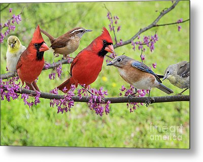 Metal Print featuring the photograph Is It Spring Yet? by Bonnie Barry