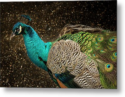 Metal Print featuring the photograph Is She Looking ? by Jean Noren