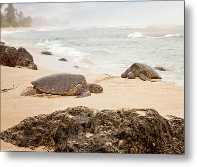 Metal Print featuring the photograph Island Rest by Heather Applegate