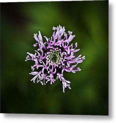 Isolated Flower Metal Print