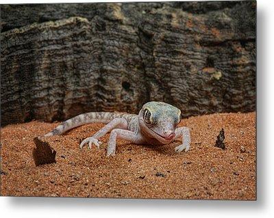 Metal Print featuring the photograph Israeli Sand Gecko - 1 by Nikolyn McDonald