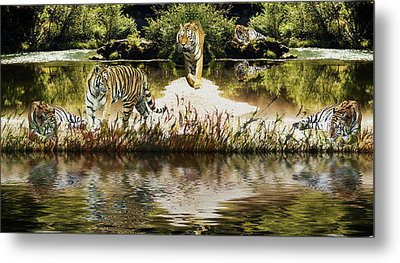 Metal Print featuring the photograph It Must Be Time For A Tiger Nap by Diane Schuster
