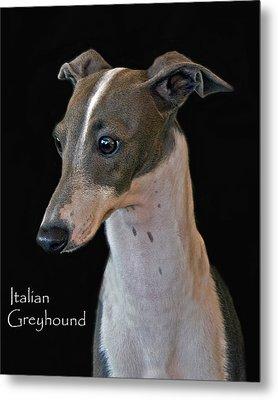 Italian Greyhound Metal Print by Larry Linton