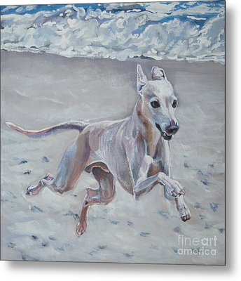 Italian Greyhound On The Beach Metal Print by Lee Ann Shepard