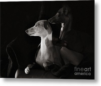Italian Greyhound Profiles In Black And White Metal Print by Angela Rath