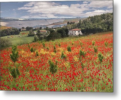 Italian Poppy Field Metal Print