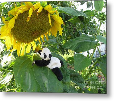 Metal Print featuring the photograph It's A Big Sunflower by Ausra Huntington nee Paulauskaite