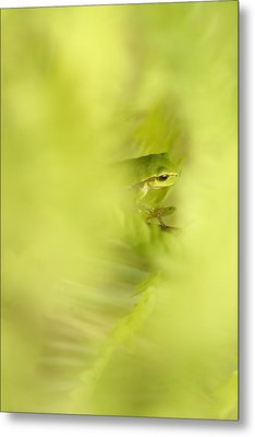 It's Not Easy Being Green - Tree Frog Hiding  Metal Print by Roeselien Raimond