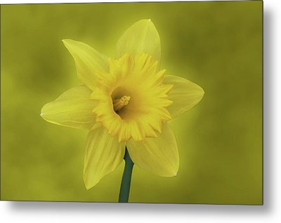 It's Spring Metal Print by Sandy Keeton