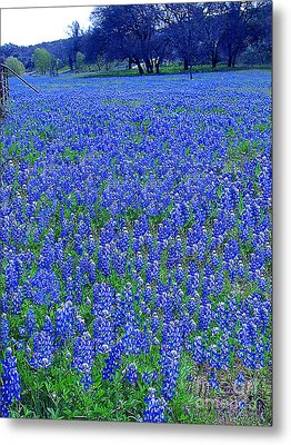 It's Spring - Texas Bluebonnets Time Metal Print by Merton Allen
