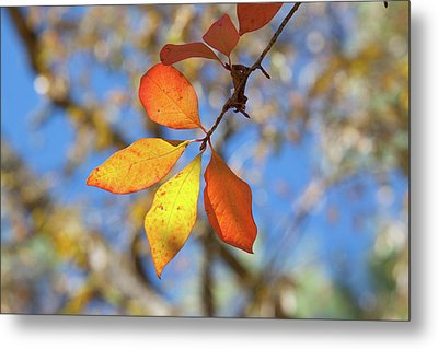 Metal Print featuring the photograph It's Time To Change by Linda Unger