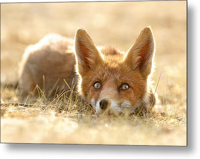 Little Fox Dreaming Of A Foxy Future Metal Print by Roeselien Raimond
