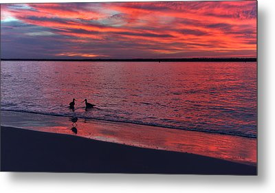 I've Been Wading On You Metal Print by Betsy Knapp