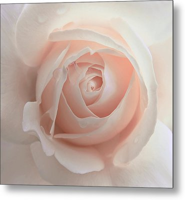 Ivory Peach Pastel Rose Flower Metal Print by Jennie Marie Schell