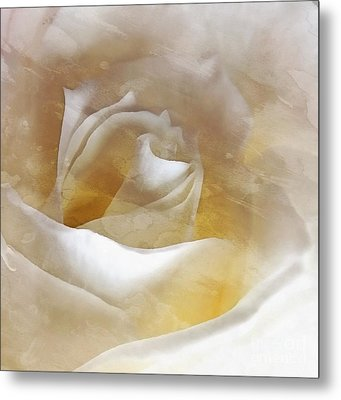 Metal Print featuring the photograph Ivory Rose - An Affair To Remember   by Janine Riley