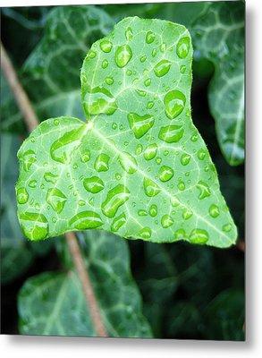 Ivy Leaf Metal Print by Michael Peychich