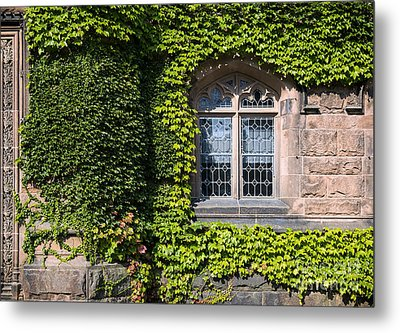 Ivy League Metal Print by John Greim