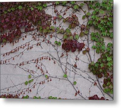 Ivy Wall II Metal Print by Anna Villarreal Garbis