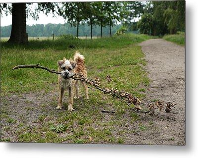 Dutch Dog With A Branch Metal Print by Rona Black